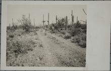 Cacti and Road