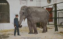 "Print of Indian Elephant ""Gunda"""