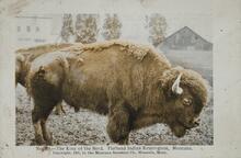 Postcard of Buffalo