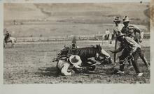 Postcard of Fallen Horse and Rider