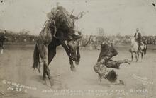 Postcard of Man Falling from Bucking Horse