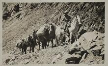 Postcard of Man with Pack Horses