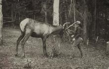 Postcard of Man and Elk