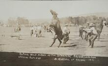 Postcard of Bucking Horse