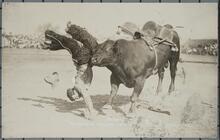 The Famous Bucking Bull