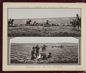 'Roping a Steer to Inspect Brand' and 'Branding on the Prairie'