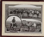 'Cow Ponies Taking a Rest', 'Riding a Yearling', and 'Taking Up the Back Cinch'