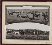 'Cutting Out' and 'Roping a Pony from the Herd'