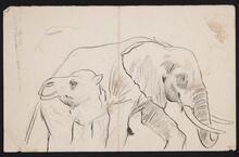 Elephant and Camel